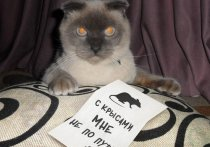 Барнаульский кот Барсик вошел в рейтинг самых популярных котов десятилетия