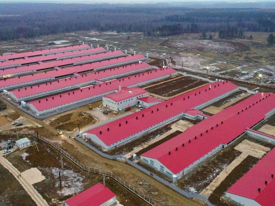 В Ивановской области реализуется крупный сельскохозяйственный проект