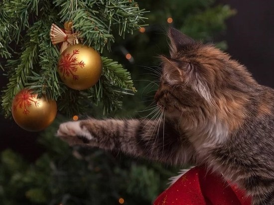 Чудим, едим и раздаем долги: псковички поделились секретами новогоднего настроения