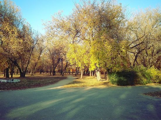 Каким видят парк «Изумрудный» барнаульцы