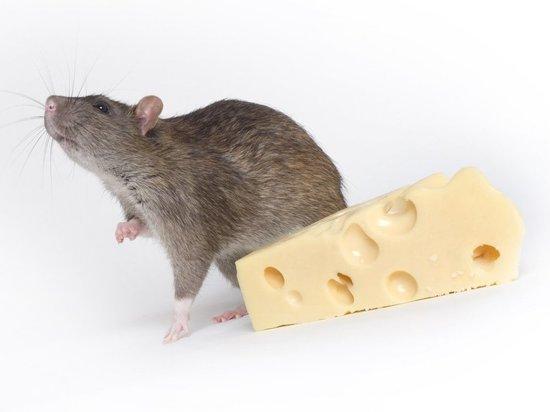 Скачать картинки с новым 2020 годом крысы