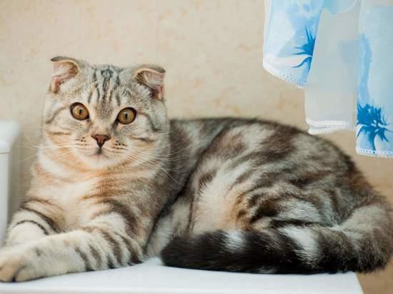 Как приучить кота купаться в ванне, рассказали волгоградцам