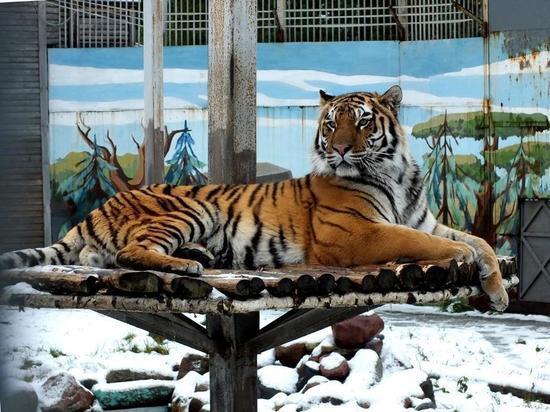 Звери в Ивановском зоопарке будут рады елкам