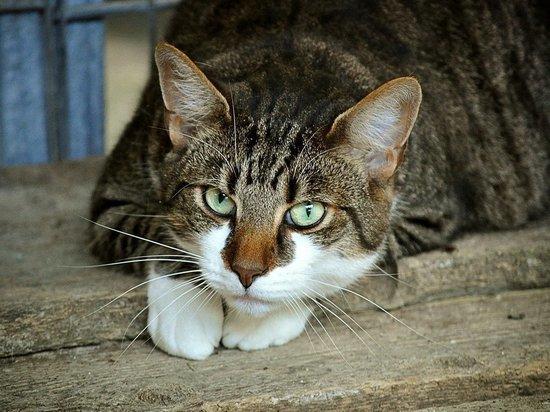 В Локне домашний кот заразился бешенством и набросился на хозяина
