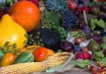 Диетологи назвали «здоровые» продукты, которые должны быть у каждого