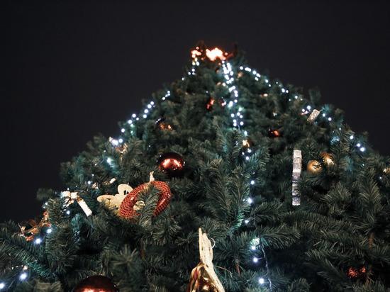 Век за веком одним цветом: история возникновения тверских новогодних ёлок
