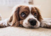 Люди, которые провели детство в квартире с собакой, впоследствии реже страдают от шизофрении и других психических заболеваний