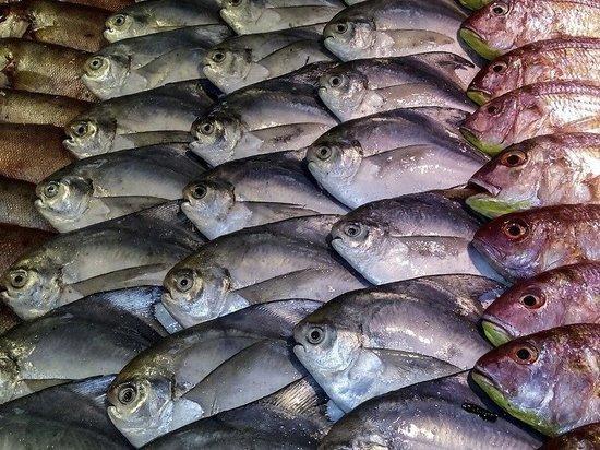 В Александрове торговали рыбой без сопроводительных документов