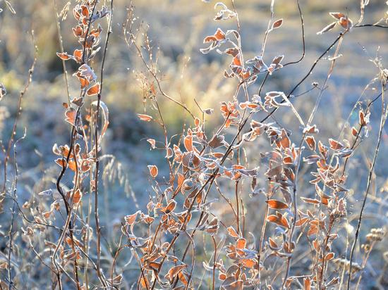В Алтайском крае потеплеет после Нового года
