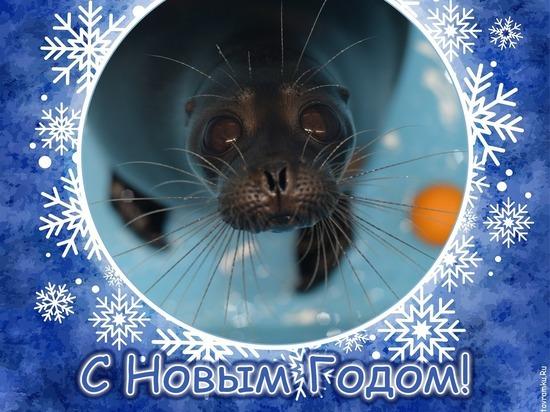 Нерпенок Крошик пожелал петербуржцам верных и заботливых друзей