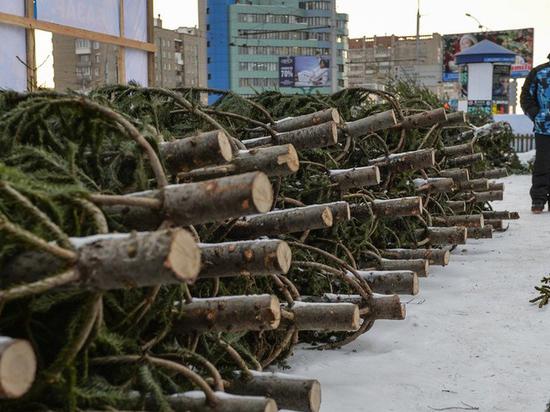 Камчатский воришка пытался украсть елку перед новым годом