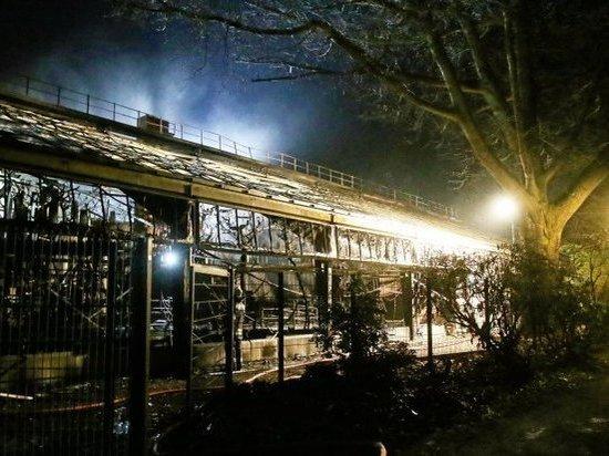Германия. Трагедия в Крефельдском зоопарке