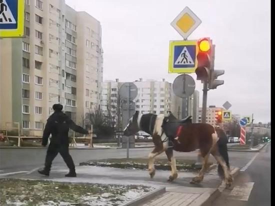 В Петербурге полиция задержала одинокую лошадь
