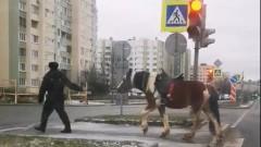 В Петербурге полиция доставила в отделение одинокую лошадь
