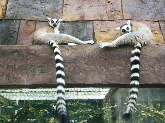 В России запретили контактные зоопарки