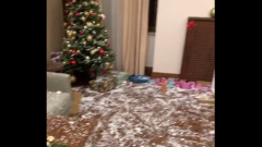 Павел Воля и Ляйсан Утяшева сняли на видео новогодний погром в квартире