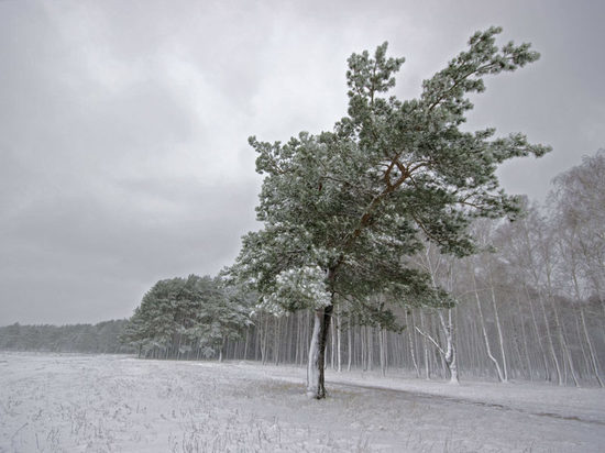 В Челябинской области ожидается сильный ветер до 18 метров в секунду