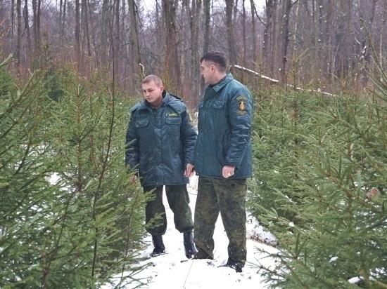 «Русский лес» ёлочки бережёт