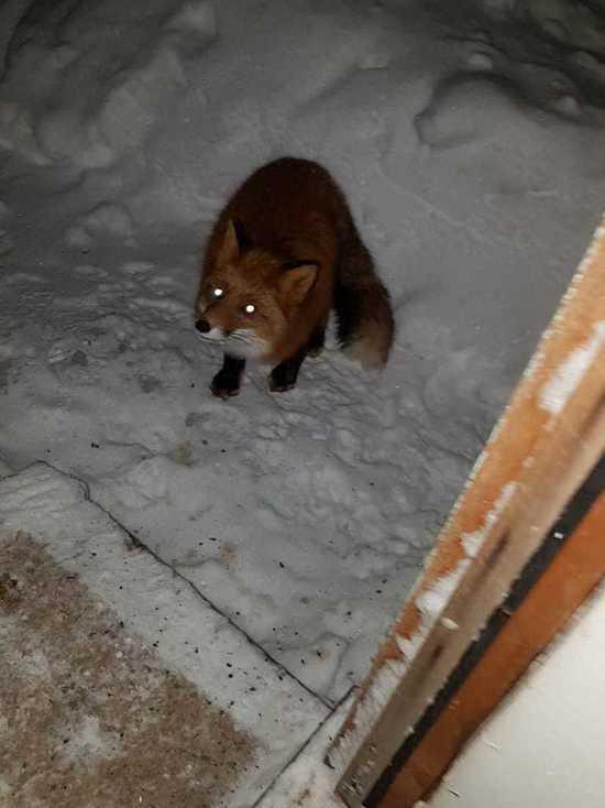 На Камчатке дикие звери выходят к людям