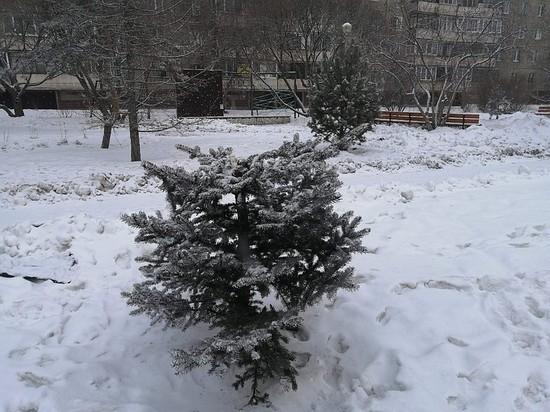 В Челябинске поломали ели на Университетской набережной