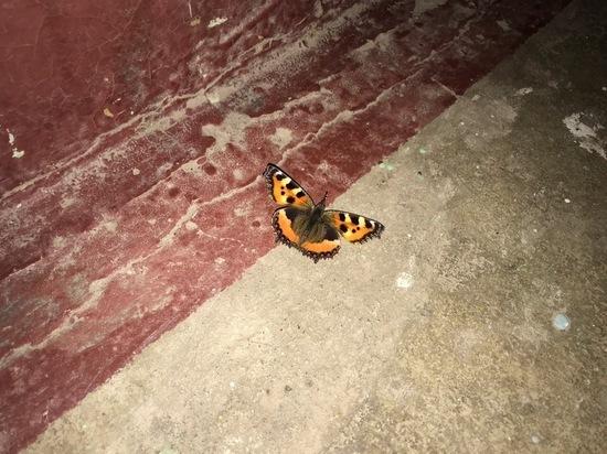 В Петербурге посреди зимы пробудились бабочки
