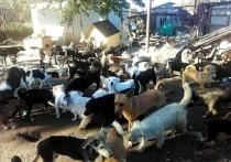 Жительница Темрюка спасла больше 560 бездомных собак