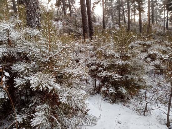 Температура воздуха в Забайкалье 8 января поднимется до 5° мороза