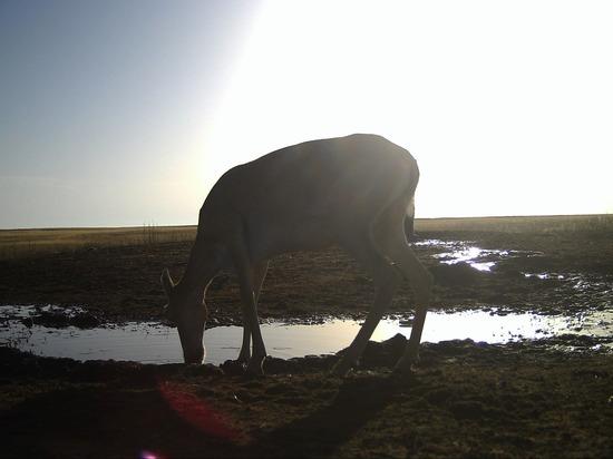 Калмыцкие «Черные земли» увеличат вдвое