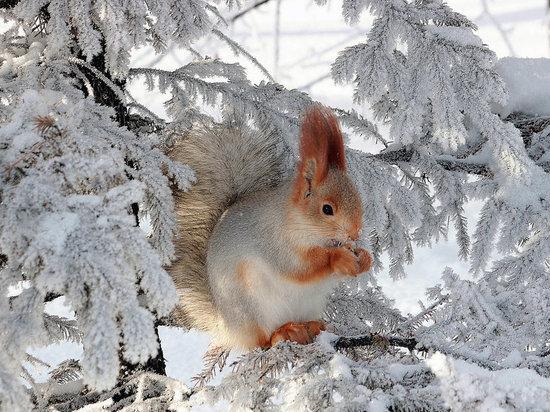В Челябинской области до -13, местами снег