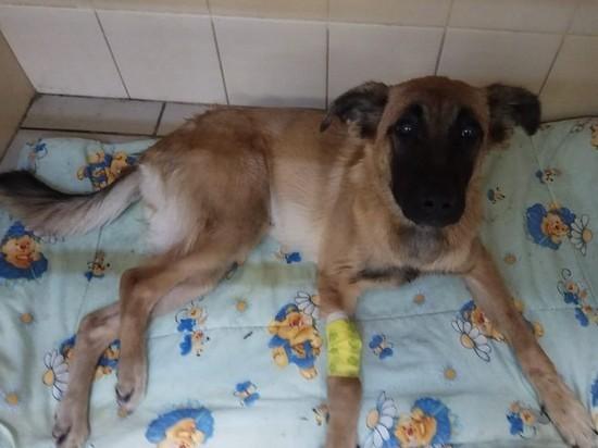 Дело живодера, выбросившего из окна щенка, передали в суд