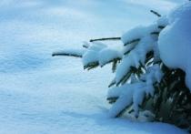 Тульская природоохранная прокуратура назвала нарушителей лесного законодательства