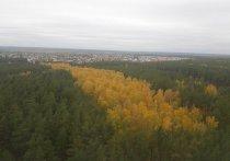 В Воронеже установили границы лесопаркового зеленого пояса