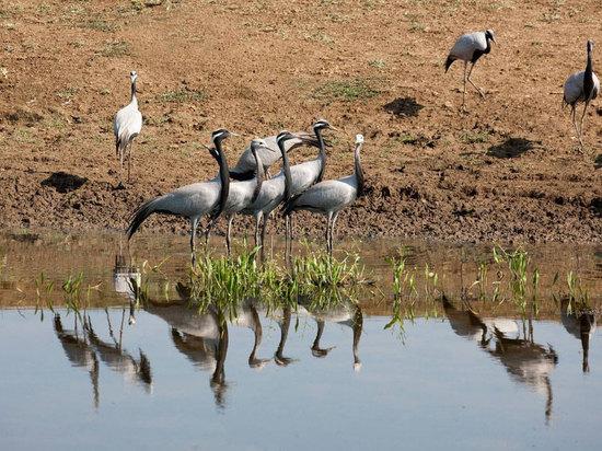 В Калмыкии отмечают День заповедников и национальных парков