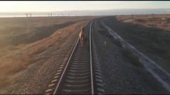 В Астраханской области сняли верблюда, изменившего расписание поездов