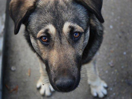 С начала года в Иванове отловили шесть бездомных псов