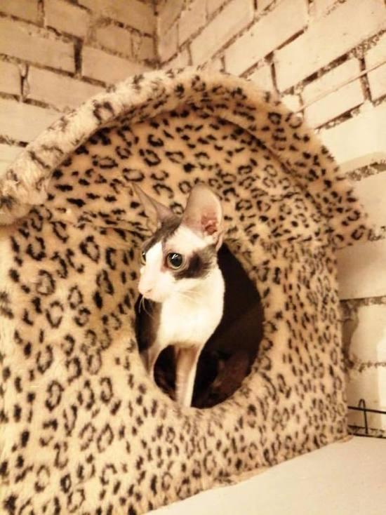 """Псковская """"Зоозащита"""": Кошки из """"камеры пыток"""" приходят в себя"""