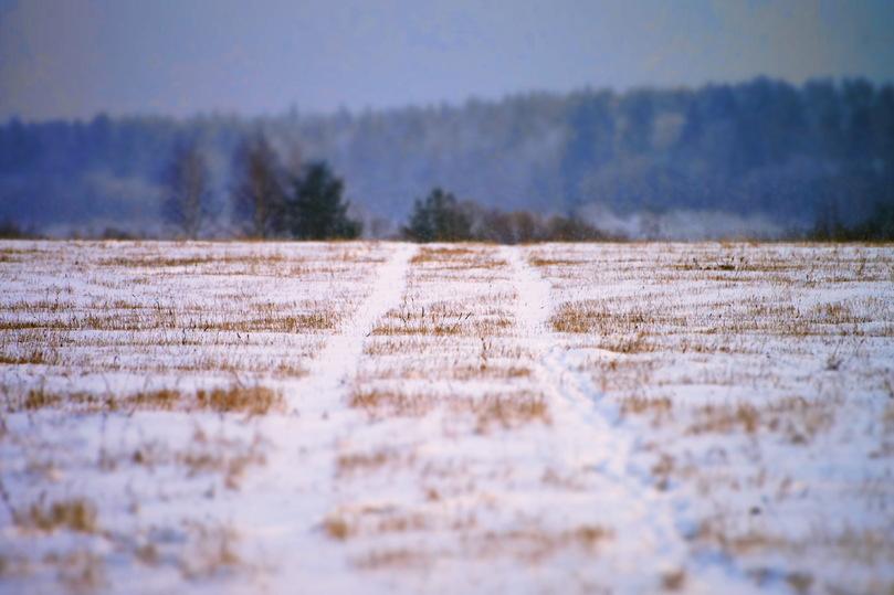 Зима без градуса: как жителю Твери пережить аномально теплый январь