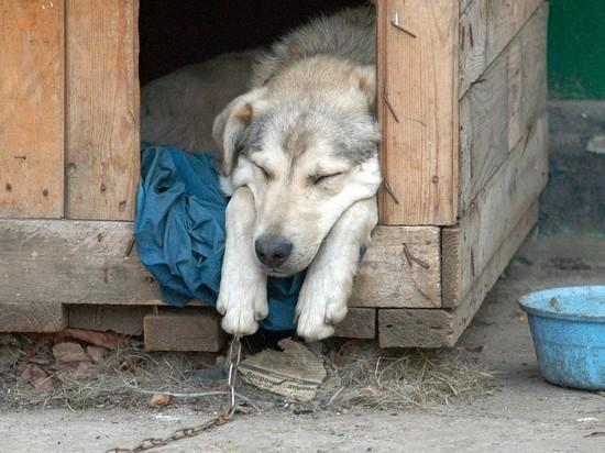 В Башкирии из собачьей конуры украли более 1 млн рублей