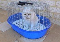 Разрешить провоз домашних животных весом до 10 кг в салоне самолета предлагают в Общественной палате