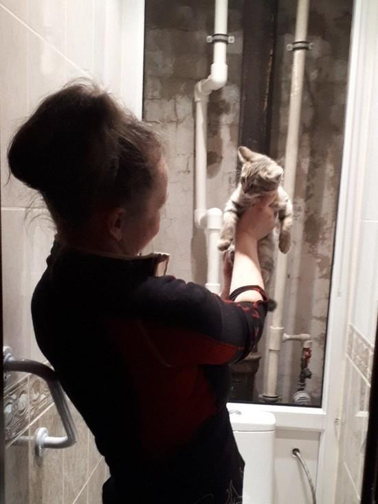 Зооактивисты Петербурга спасли за год почти 900 кошек