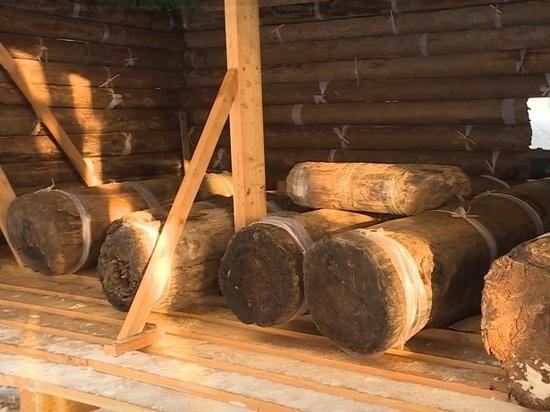 Древнейшее в мире деревянное сооружение изучают в Горно-Алтайске