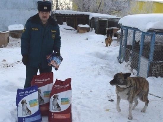 Пожарные Лангепаса помогают бездомным животным
