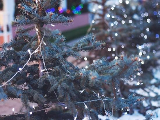 Владимирцам предлагают переработать свои новогодние елки