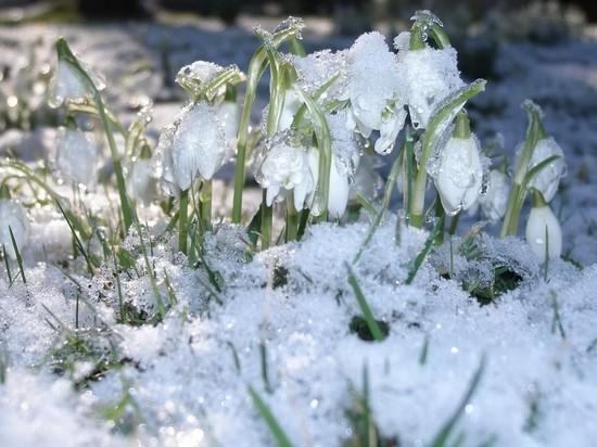 Россиянам предсказали раннюю весну