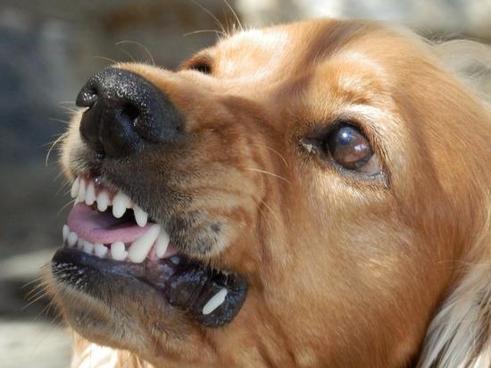 В Йошкар-Оле умер покусанный собаками мужчина