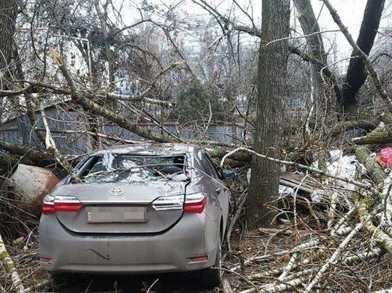 В Ростове засохшее дерево упало на иномарку