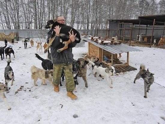 """В Воронеже напали на владельца приюта """"Дора"""" для бездомных собак"""