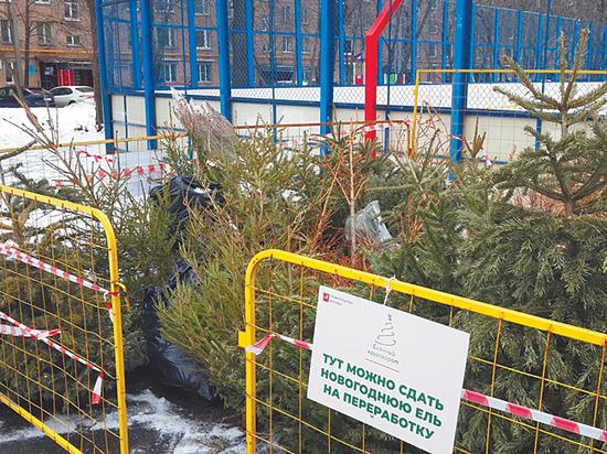 Москвичка придумала способ выкинуть елку, не намусорив