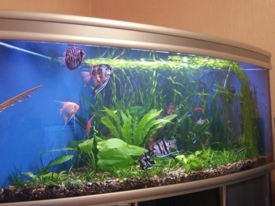 Так ли это легко и просто – завести аквариум?