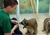 С 1 января 2020 года вступила в силу статья 15 ФЗ «Об ответственном обращении с животными», которая ограничивает их использование для культурно-зрелищных целей в общественных местах